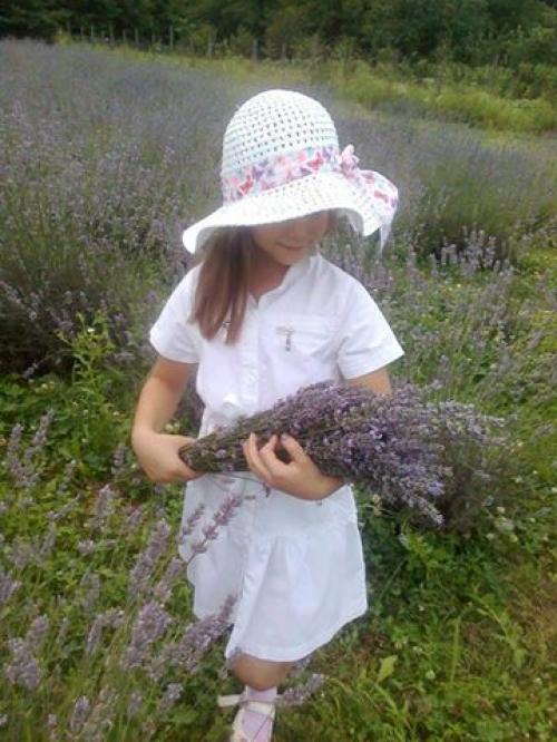 Slavonska polja lavande